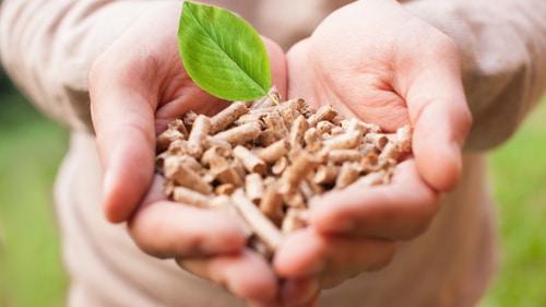 Conociendo la biomasa y sus beneficios
